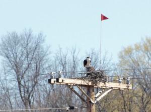 Osprey taken 4/10/12