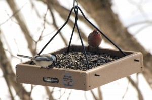 House Finch and a Chickadee